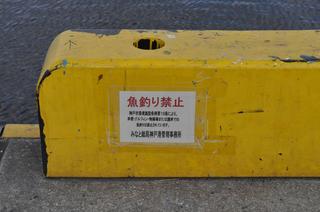 nikon-D5000 013.JPG